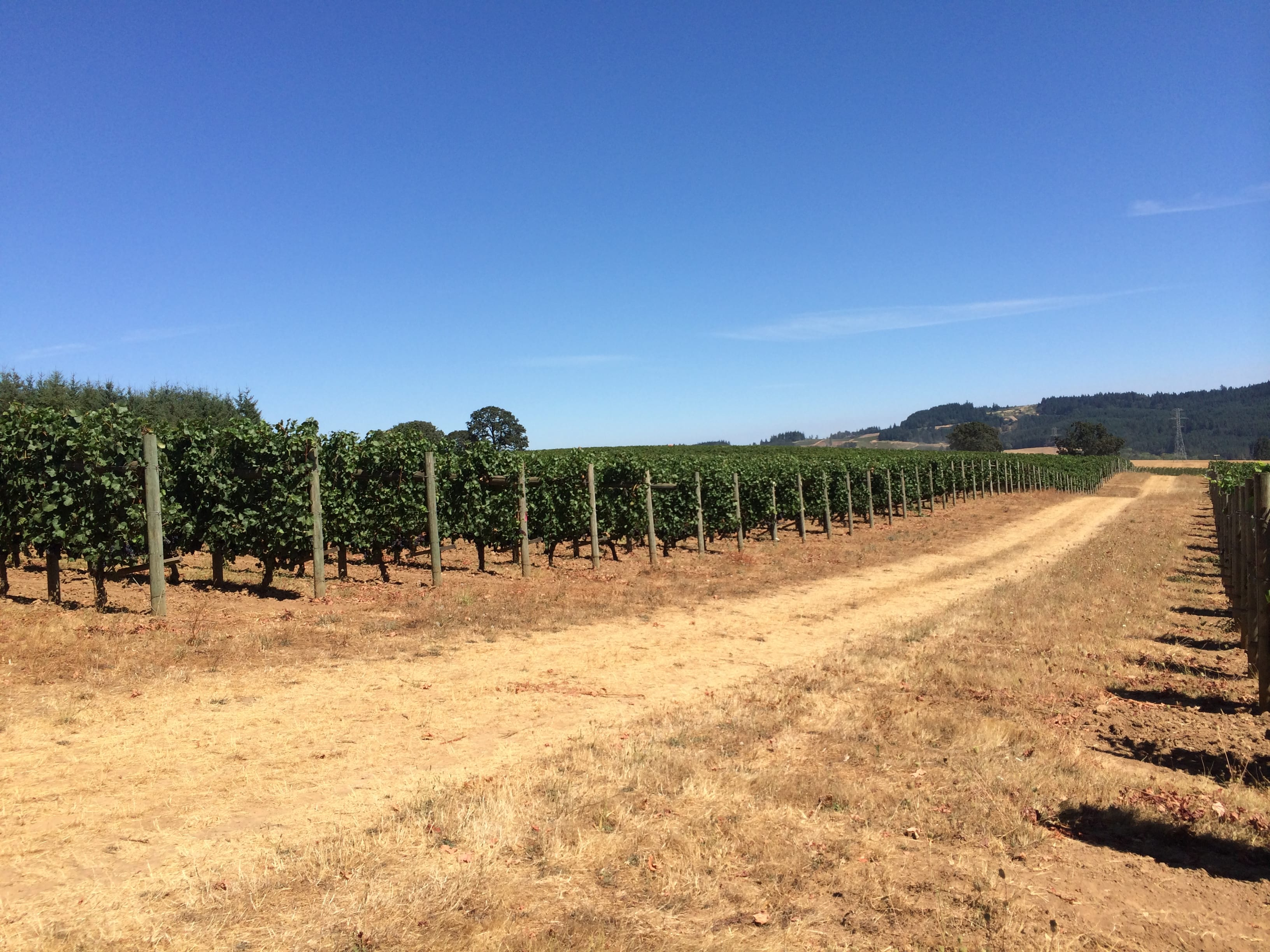 Asa took us up to Abbott Claim Vineyard which was a great vantage to visually take in the Willamette Valley.